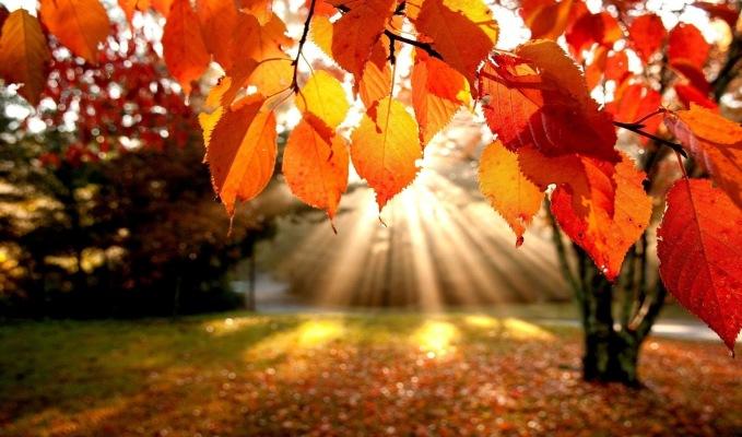 De ce ingalbenesc si de ce cad frunzele copacilor toamna?