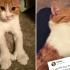A murit Paddles, Prima Pisica a Noii Zeelande!