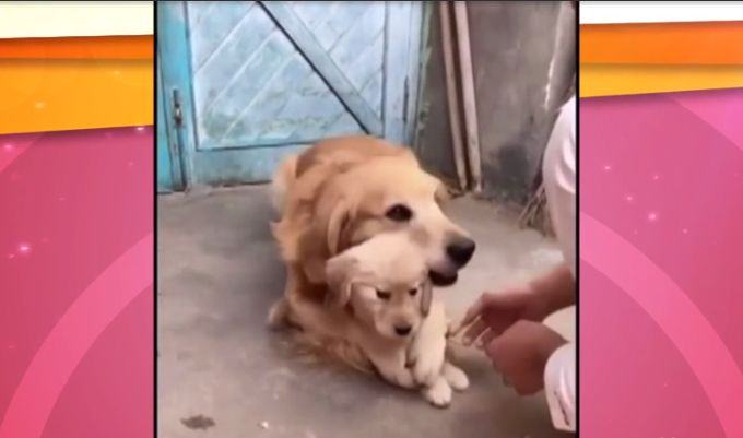 VIDEO: Acest tatic hiperprotector este totodata... hiper-simpatic!