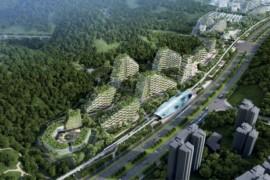 China va finaliza pana in 2020 un oras padure care absoarbe poluarea!