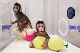 Suntem cu un pas mai aproape de clonarea umana…