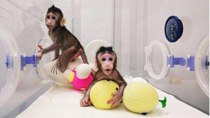 Suntem cu un pas mai aproape de clonarea umana...