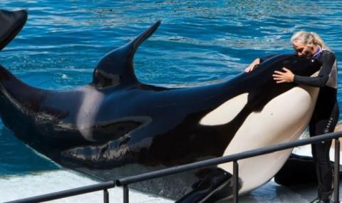 "VIDEO: Aceasta orca a invatat sa spuna ""buna"", ""la revedere"" si numara pana la 3!"