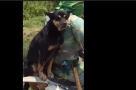VIDEO: Cine a spus ca un caine nu poate merge cu motocicleta? Ia priviti!